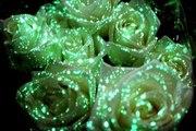 Флористическая краска (био-гель) для цветов светящаяся в темноте.